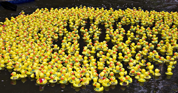 plastic ducks looks like Duck Race